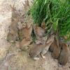 杂交野兔养殖加盟,哪里有杂交野兔养殖加盟厂家?