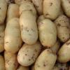 供应天然马铃薯