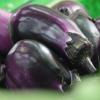 供应新鲜绿色有机无公害健康蔬菜茄子