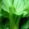 芜湖县旺民绿色小白菜,新鲜营养价值高