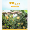 产地货源新鲜蜜桃 拼箱混装新鲜桃子 沂蒙山产品供应应季新鲜水果