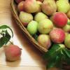 安徽特产农村直供水蜜桃 新鲜水果 优质水蜜桃