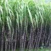 2016年天然产地黄皮甘蔗、青皮甘蔗