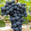 农家自产自销水果