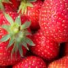 精选新鲜双流冬草莓