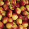 现货新鲜桃子 水果油桃 产地批发