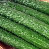 新鲜蔬菜黄瓜 批发 绿色食品基地直销 无公害蔬菜