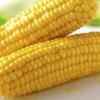 新鲜水果玉米 1500g农家有机蔬菜 产地直发
