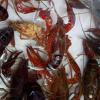 巢湖中河生态养殖专业合作社生态养殖小龙虾(价格面议)
