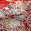 新鲜大闸蟹
