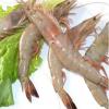 庐江县郭河镇张金龙家庭农场,用途:食用,品种:对虾,规格:8~12