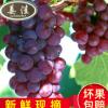 原产地直销水果 新鲜水果葡萄 绿色有机水果 水果一件代发