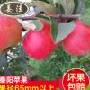 原产地直销水果 新鲜有机苹果水果批发 秦阳苹果水果一件代发