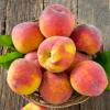 砀山特产 农村直供黄桃 新鲜水果 优质黄桃