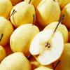 砀山特产 农村直供酥梨 皇冠梨 新鲜 水果 优质梨