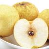 砀山特产 农村直供酥梨 皇冠梨 新鲜水果 优质
