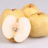 安徽正宗 砀山酥梨 现采摘酥梨 新鲜水果特产 批发