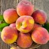 砀山黄桃现摘新鲜桃子 黄桃水果 新鲜大黄桃 脆毛桃