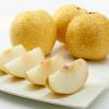 砀山梨子新鲜水果砀山酥梨 榨汁专用 现摘现发