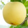 特价促销新鲜水果 皇冠梨 现摘现卖产地直邮批发