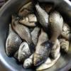 销售优质水产品鲜活鲫鱼