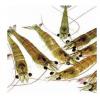 大量批发日本大青虾