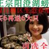 特产大闸蟹鲜活螃蟹毛蟹公母蟹礼盒装顺丰包邮