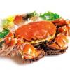 现货10只肥膏王大闸蟹3.5公2.5母固城湖大闸蟹鲜活螃蟹礼盒装