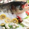 房县白浴养殖 新鲜水产 鲢鱼