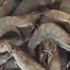 海虾鲜活 活虾 对虾 基围虾新鲜大虾