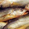 野生小黄鱼 新鲜冷冻黄鱼 海鲜 特价5斤包邮