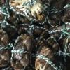 鲜活大螃蟹现货大螃蟹一斤 批发包邮