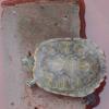 供应芜湖县特种水产乌龟