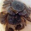 供应芜湖县特种水产螃蟹