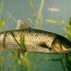 养淡水鱼殖