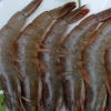 芜湖静辰野生对虾 美味鲜活健康
