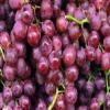 供应 优质葡萄 新鲜采摘 新鲜水果
