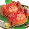 供应公4.3-4.0 母螃蟹3.1-3.0