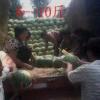 安徽砀山甜瓜西瓜基地