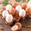 直供优质种蛋 散养土鸡种蛋 鸡蛋种蛋批发 量大价优 现货供应