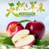 预售新鲜苹果 苹果水果 现摘批发 产地直销膜袋红富士 量大从优