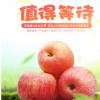 预售产地直销苹果 新鲜红富士苹果 脆甜纸加膜红富士 现货批发