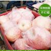 预售批发红富士苹果 脆甜爽口 现摘现发 新鲜苹果 现货