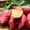 厂家种植小香薯新鲜红薯番薯黄心农家小香薯山芋地瓜批发2