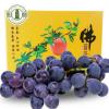 霖森农业科技 优质无公害 夏黑葡萄 产于日照充足的无污染云南山区