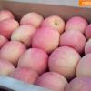 富硒苹果 灵宝仙姑塬富硒苹果【5斤包邮】
