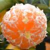 雷波脐橙 大凉山雷波脐橙 香甜橙子水果 【单果重2-3两】10斤 20斤批发