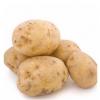 供应 马铃薯 洋芋绿色食品批发直销