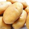 原产地无公害土豆