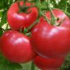 昌兴果蔬供应新鲜西红柿